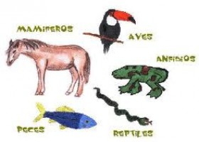 Reino Animal: Vertebrados e Invertebrados | Recurso educativo 46892