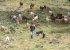 Livestock farming in Spain. | Recurso educativo 730970