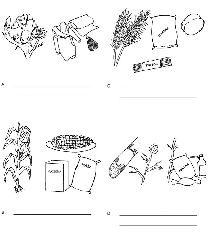 Utilidades de las plantas recurso educativo 734454 tiching for Utilidad de las plantas ornamentales